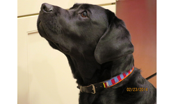 Dog Collars for Africa - Briggs