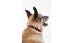 Dog Collars for Africa