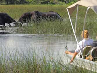 A Day In The Chobe