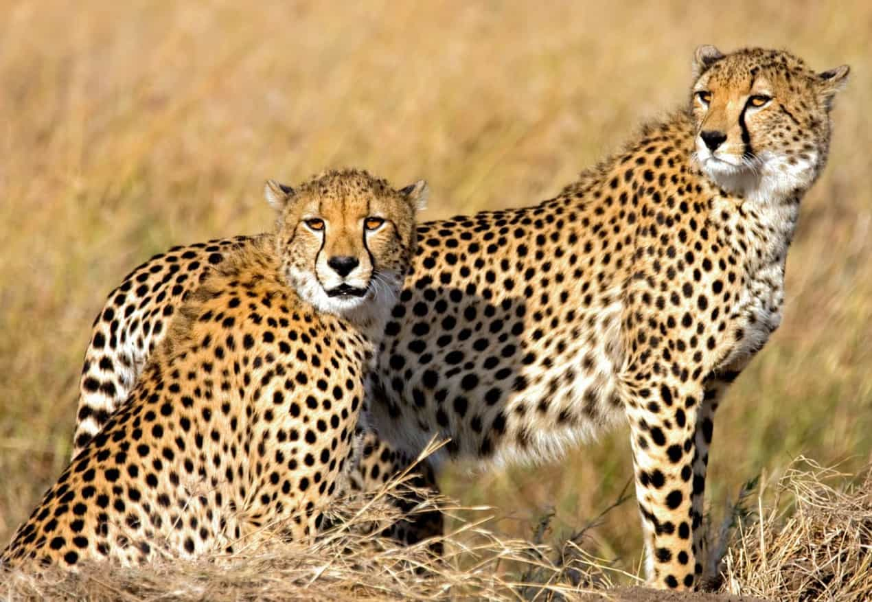 Namibia and VIP Visit To Cheetah Conservation Fund