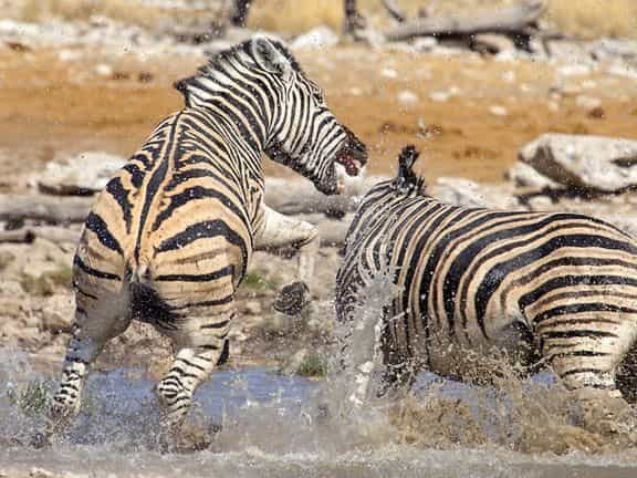 Game Drive In Etosha National Park