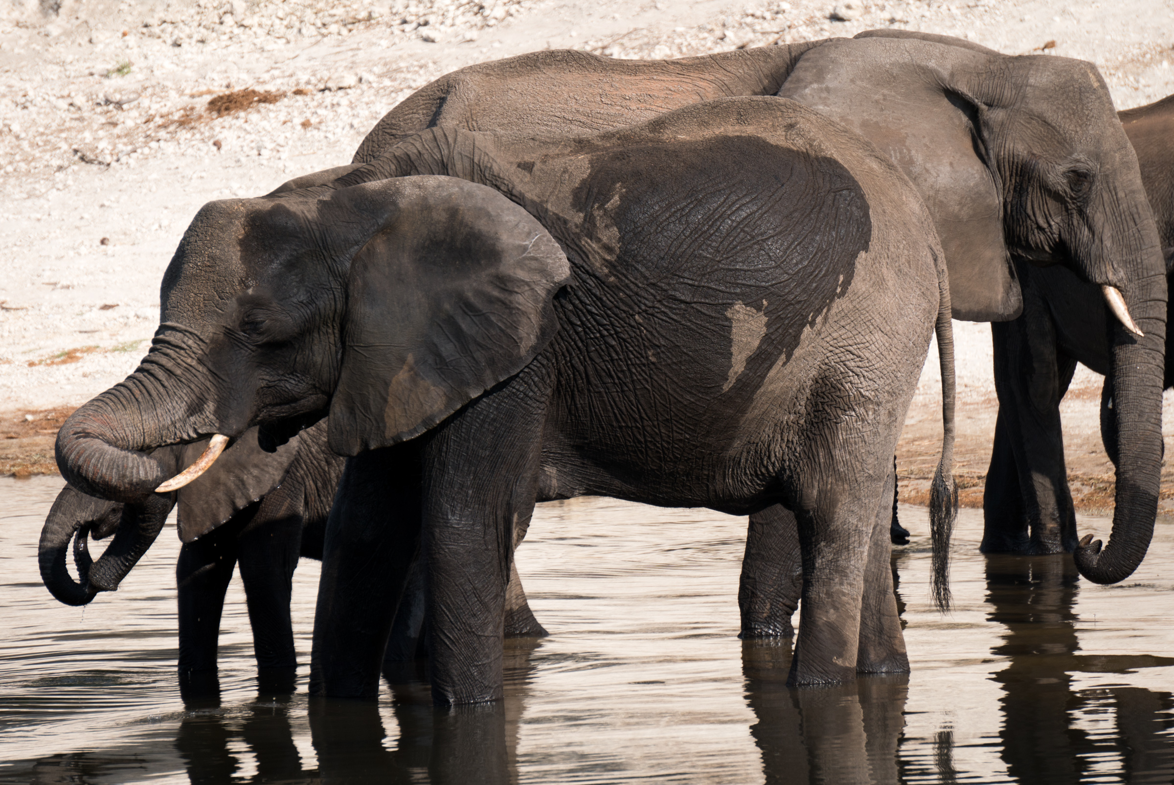 South Africa and Botswana African Safari Adventure